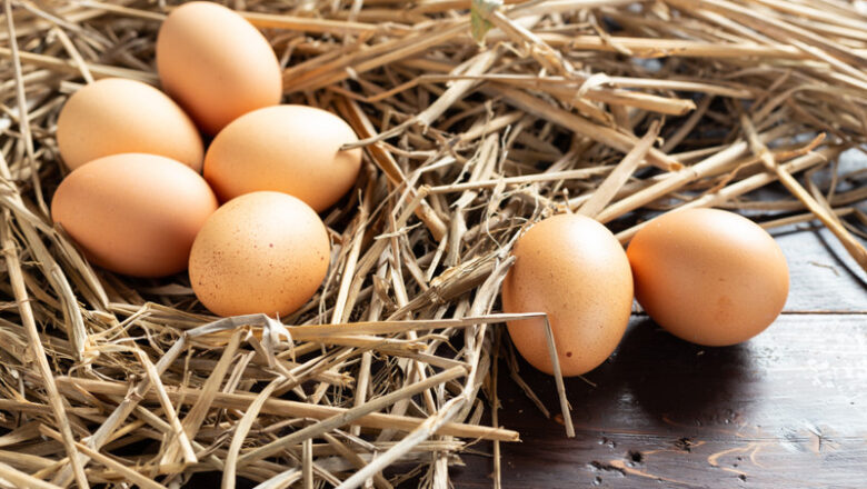 How to start a free-range chicken egg business in the Philippines
