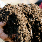 How to Turn Chicken Manure into an Organic Fertilizer
