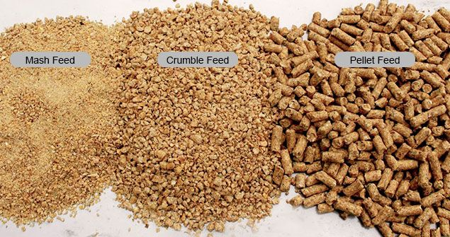 Broiler and Layer Chicken Feed Guide