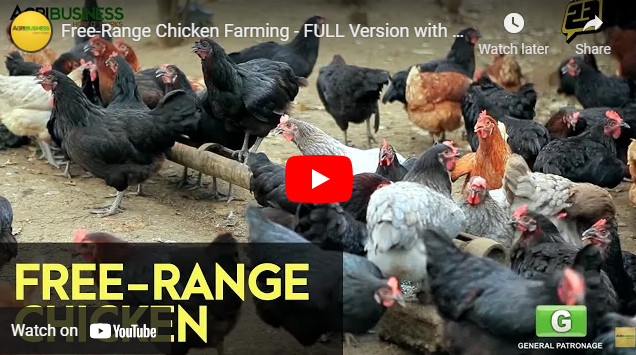 How To: Free Range Chicken Farming in the Philippines