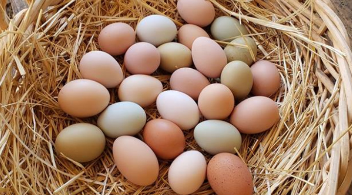 Natural ways to make your hens lay more eggs
