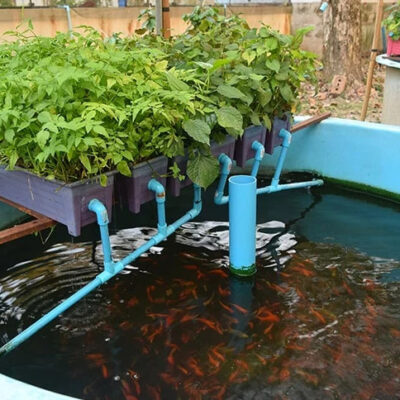 How to Make a Homemade Aquaponics and Grow Lettuce in Your Backyard