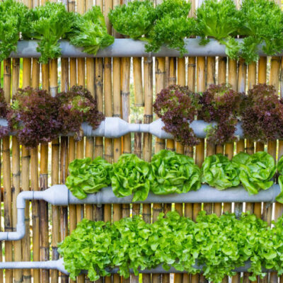 Hydroponics Plan: Why Planning is Important?