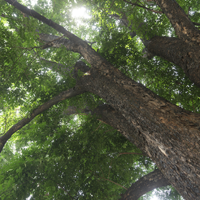 Top 15 Hardwood Trees to Plant in the Philippines for Profit