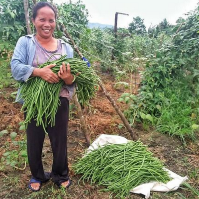 Sitaw Farming: How to Plant and Grow String Beans for Profit